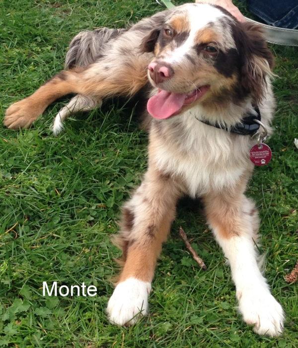 monte-5-monate